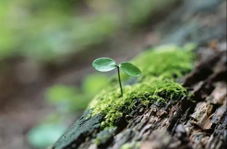 【万家康】自信与积极乐观的态度